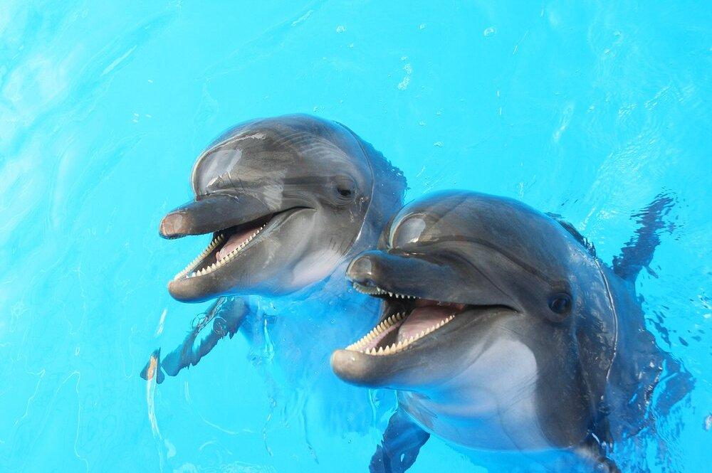 Blue Dolphin Оболочка